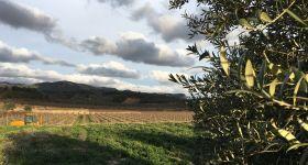 ENOTURISME AL PRIORAT - GAUDEIX L'HIVERN AL CELLER MAS DE LES VINYES