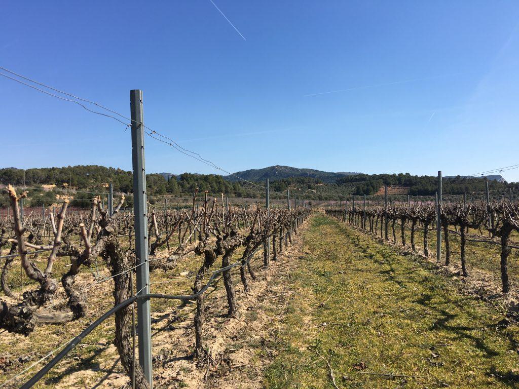 Vinos DO Montsant Mas de les Vinyes
